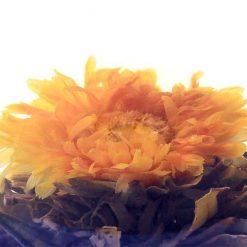 Theebloem Marigold
